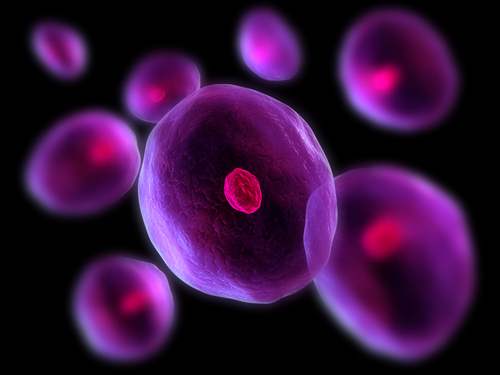 University Of Maryland Study Neonatal Heart Stem Cells